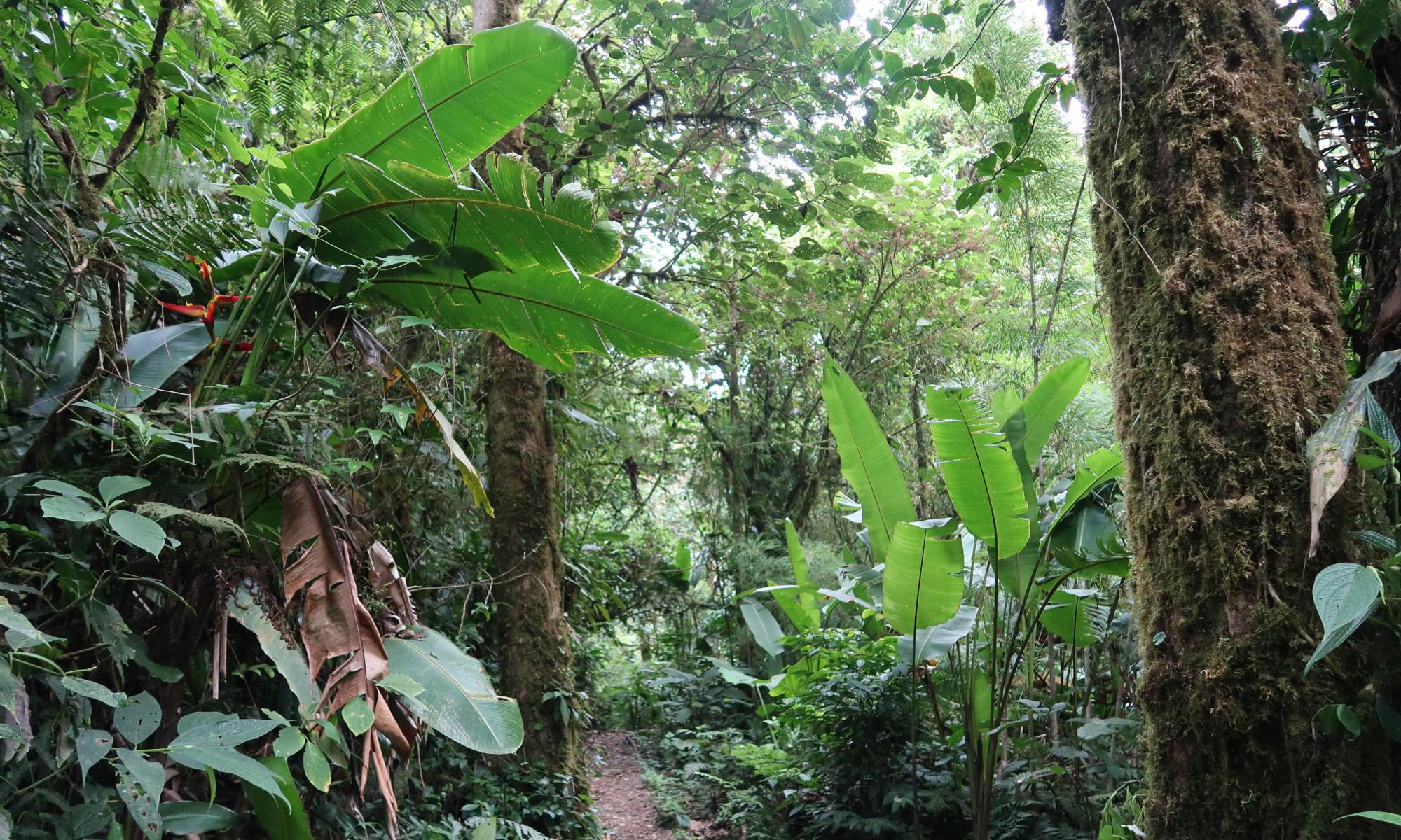 Santa Elena Nationalpark Monteverde