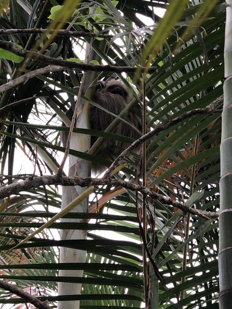 Ein Faultier in unserem Garten