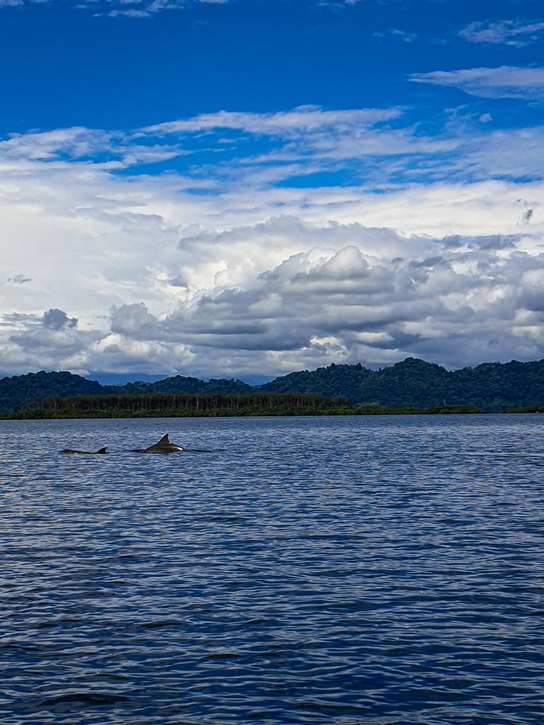 Delfinbucht Bocas del Toro