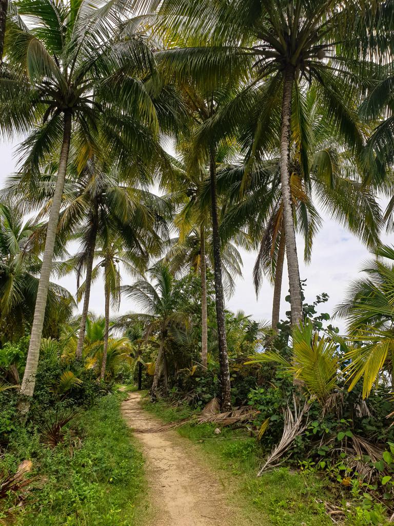 Weg zum Play Estrella - Isla Colón