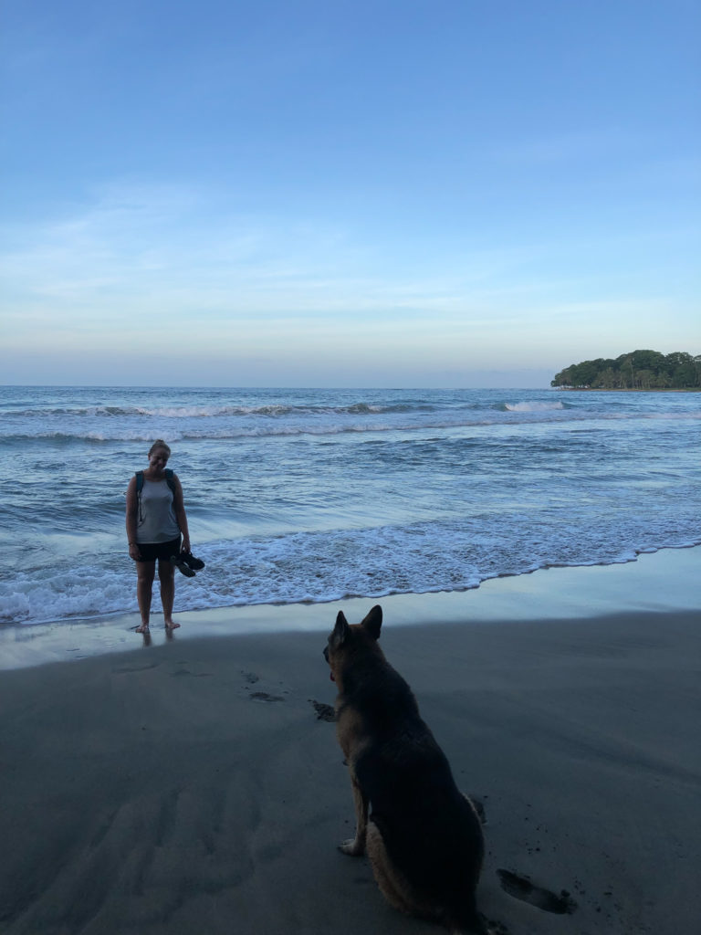 Straßenhund in Costa Rica