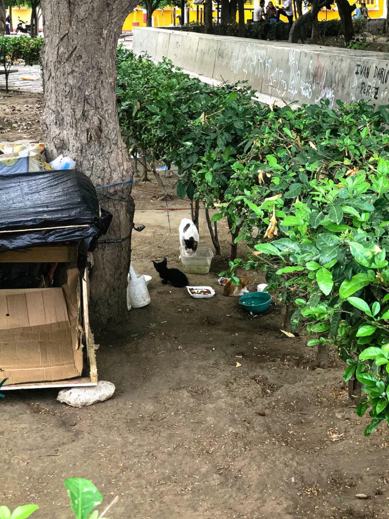 Katzenpark in Santa im Marta im Norden Kolumbiens