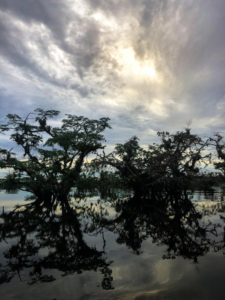 Laguna Bäume