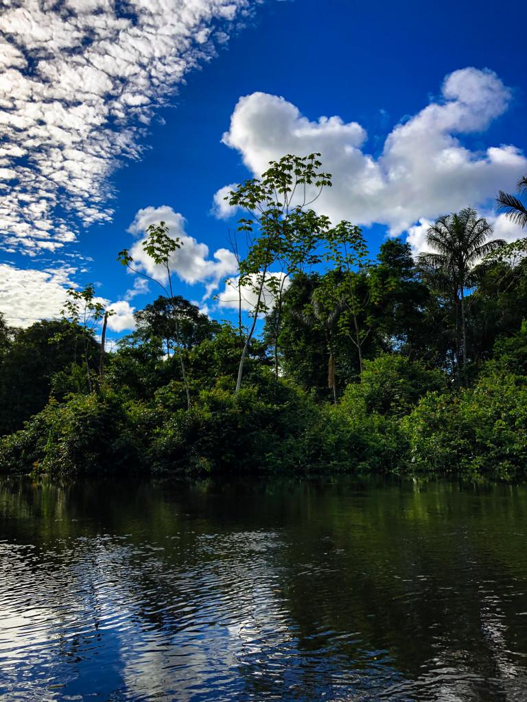 Amazonas 2 der Dschungel