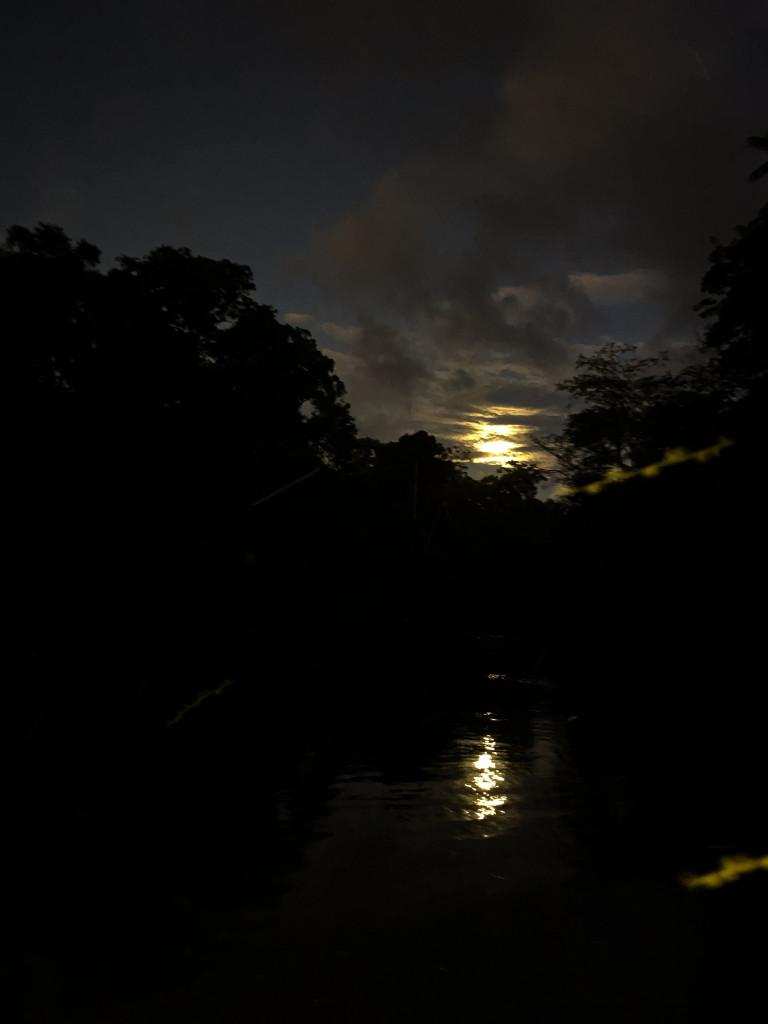 Nachtfahrt im Dschungel