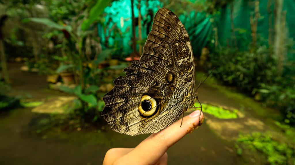 Schmetterlingsfarm in Mindo